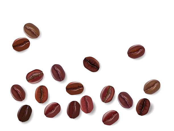 coffee beans isolated on a white background. vector illustration - ziarno kawy palonej stock illustrations