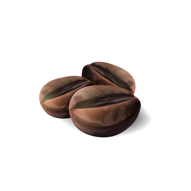 coffee beans isolated on white background, vector and illustration. - ziarno kawy palonej stock illustrations