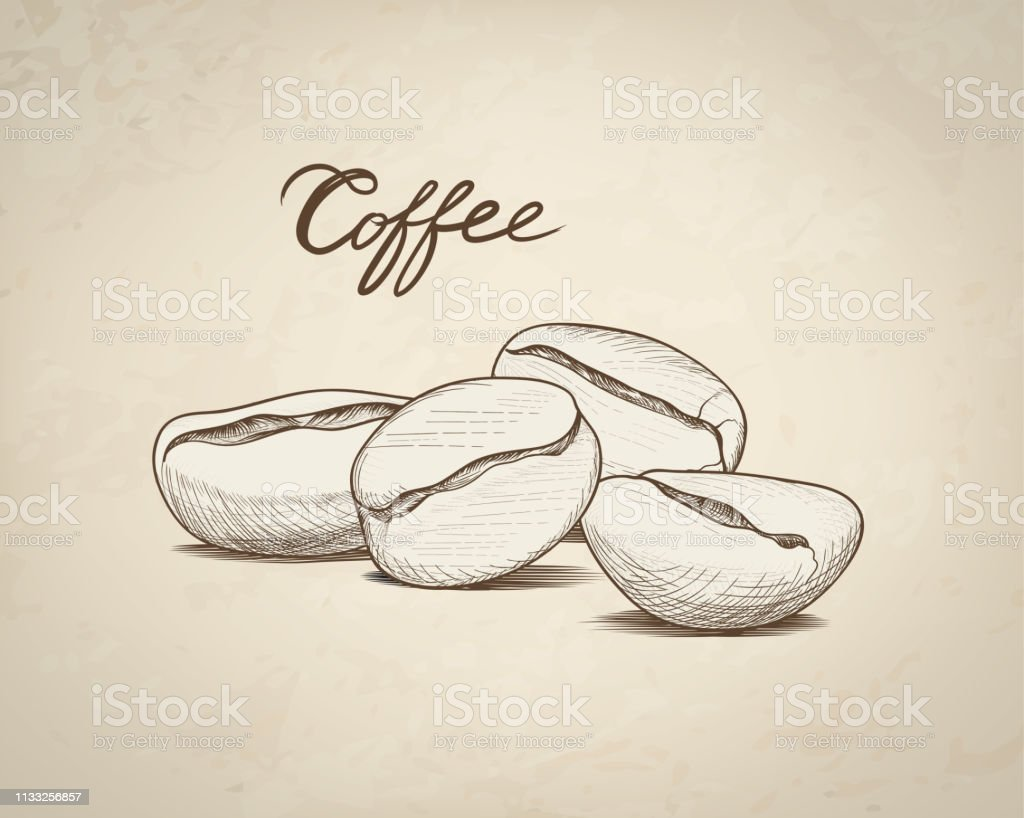 Coffee beans with handwritten lettering. Drink coffee banner hand...