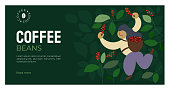 Vector illustration of picker is harvesting ripe red berries of coffee from branches of trees. Coffee beans template for farmer, roasters company. Design for banner, web, layout, prints, online store.
