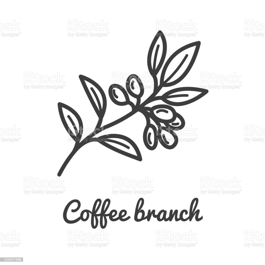 Coffee Branch Icon Coffee Plant Branch Of Coffee Icon In Line Style
