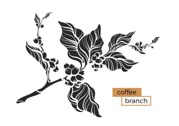 Royalty Free Coffee Plant Clip Art, Vector Images ...