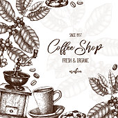 Vector design with hand drawn coffee plant sketch. Botanical illustration of Arabica with fruits.Vintage coffee packaging  template.