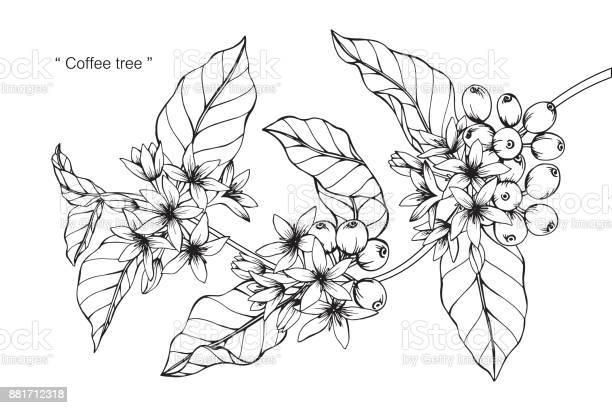 Coffee flower drawing vector id881712318?b=1&k=6&m=881712318&s=612x612&h=8aon7wuxape0rlutywlfzvyf9t1chqzx7zdcddudjce=