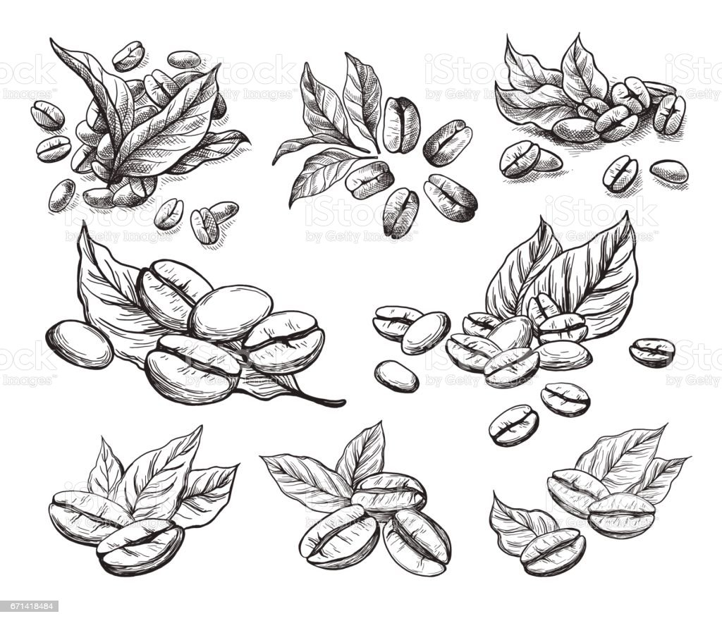 coffee grains and leaves vector art illustration
