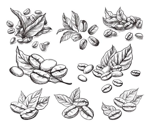 coffee grains and leaves - coffee stock illustrations, clip art, cartoons, & icons