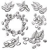 coffee grains and leaves in graphic style hand-drawn vector illustration.