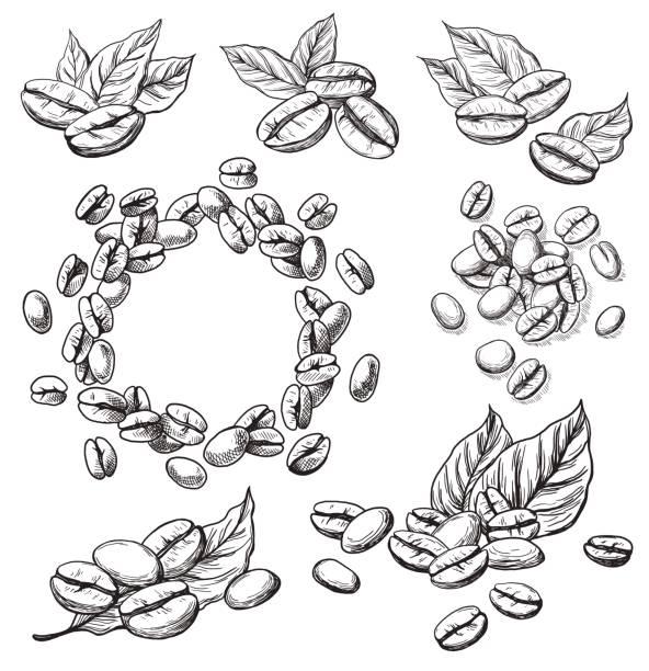 커피 곡물 및 휴가 - coffee stock illustrations