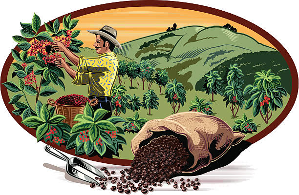 illustrazioni stock, clip art, cartoni animati e icone di tendenza di caffè in cornice ovale - coffee farmer