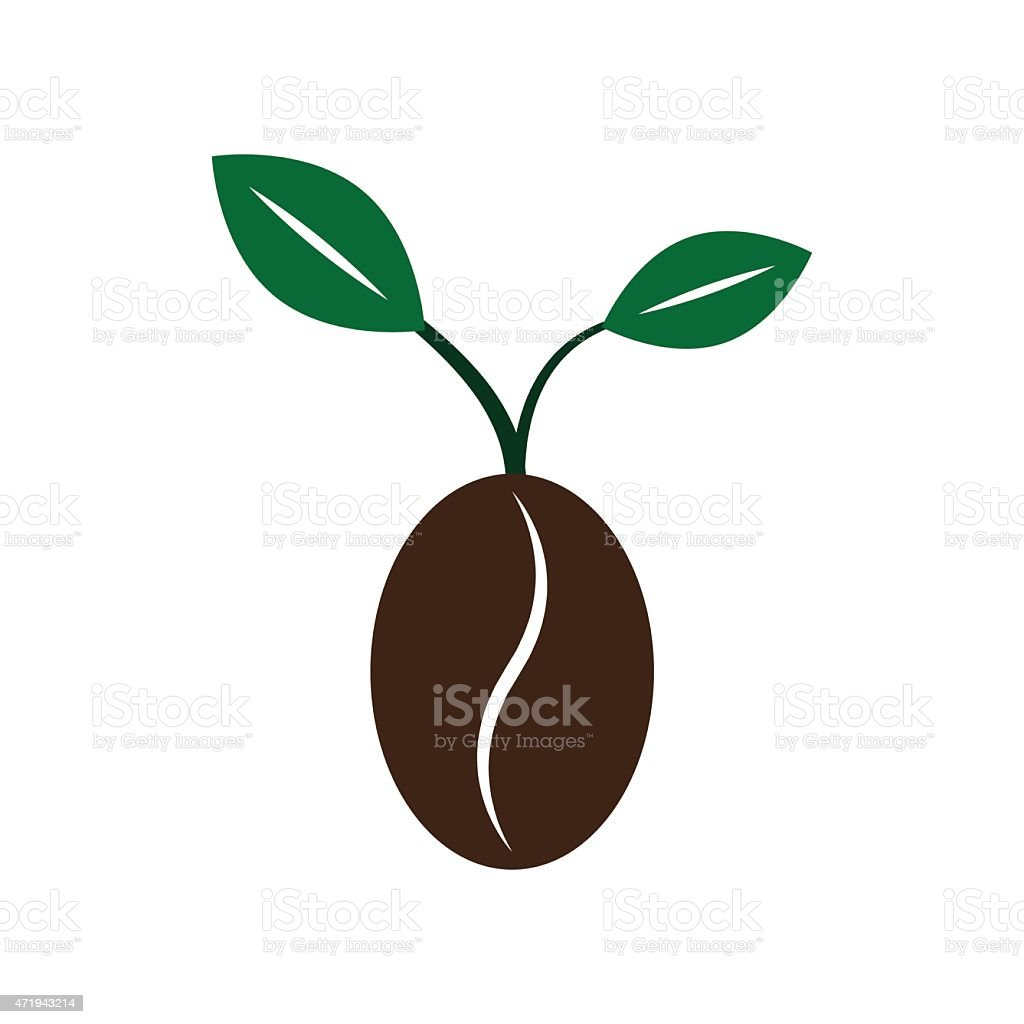 Coffee New Born Growing Bean Seed Plant Vector ...