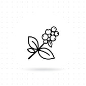 Coffee plant icon. Coffee tree branch with berries. Coffee bean with leaf on white isolated background. Branch of coffee icon in line style design. Vector illustration