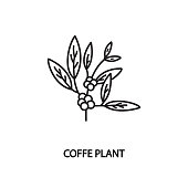 Coffee plant line flat vector icon. Concept for online store or web banners and printed materials. Editable strokes.