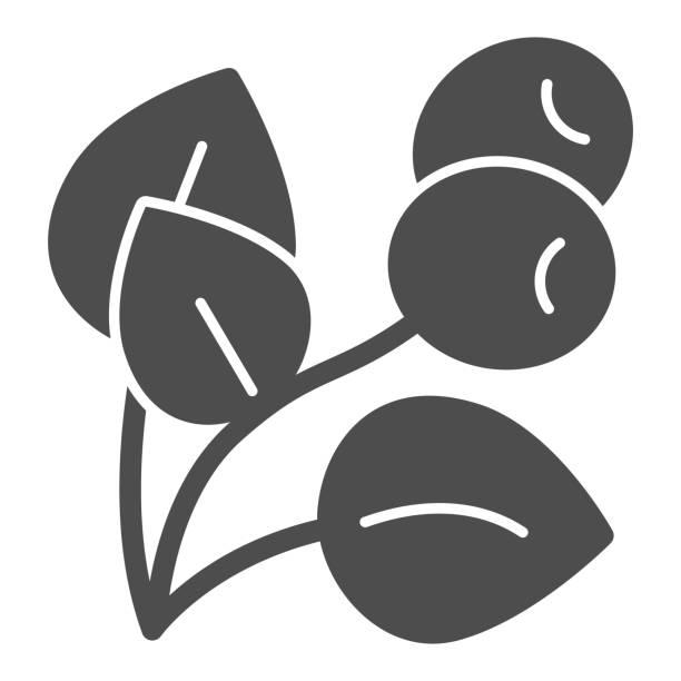 커피 식물 단단한 아이콘, 커피 시간 개념, 잎과 열매가 흰색 배경에 서명 식물, 모바일, 웹에 대한 글리프 스타일의 열매 아이콘과 커피 나무 분기. 벡터 그래픽. - 잘 익은 stock illustrations