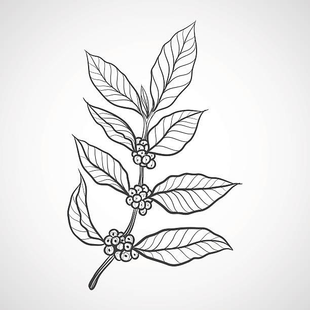 Free Coffee Tree Vector Art