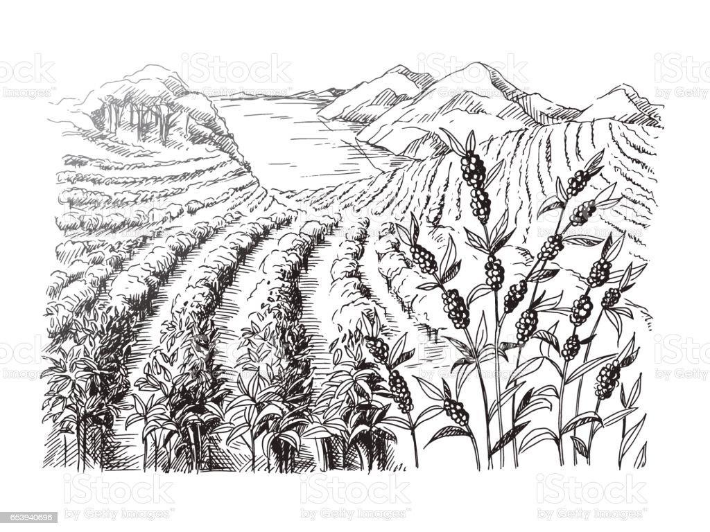 coffee plantation landscape vector art illustration