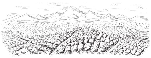 stockillustraties, clipart, cartoons en iconen met koffie plantage landschap - colombia land