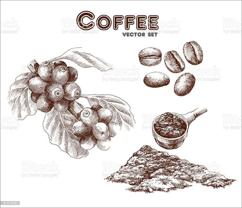 Royalty Free Coffee Plant Clip Art Vector Images Illustrations