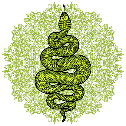 Coiled snake over floral mandala detailed illustration. Green tribal serpent isolated over white background. Vector tattoo design.