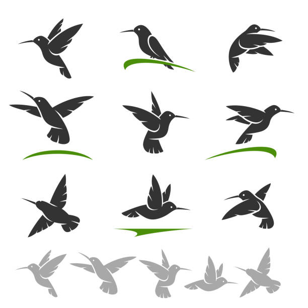 Colibri set. Vector Collection colibri set, edit size and color, vector hummingbird stock illustrations