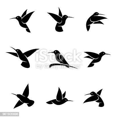 Collection colibri set, edit size and color, vector