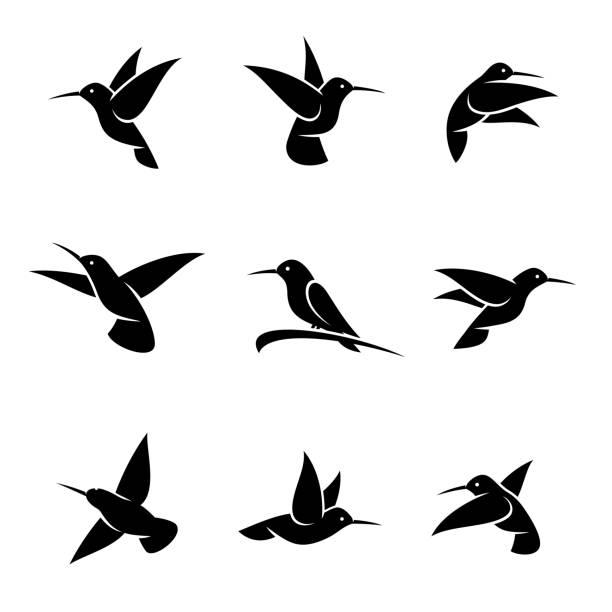 colibri set. vector - hummingbird stock illustrations