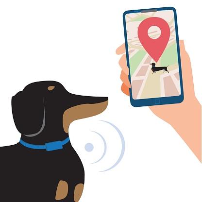 Vetores de Coleira Gps Em Um Dachshund E Um Smartphone Na Mão Para Controlar A Localização