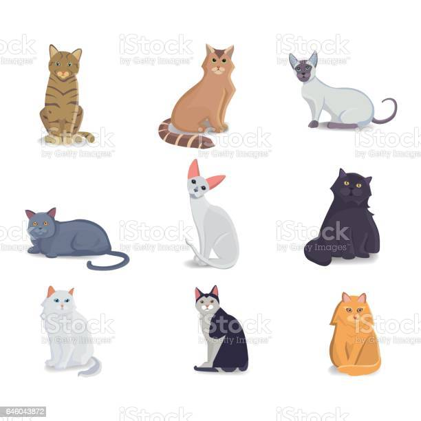 Collection cats of different breeds vector isolated cat on white vector id646043872?b=1&k=6&m=646043872&s=612x612&h=lrfmytmcttrsziwn6z rc dxeim1jzpyqo3aeadzaqq=