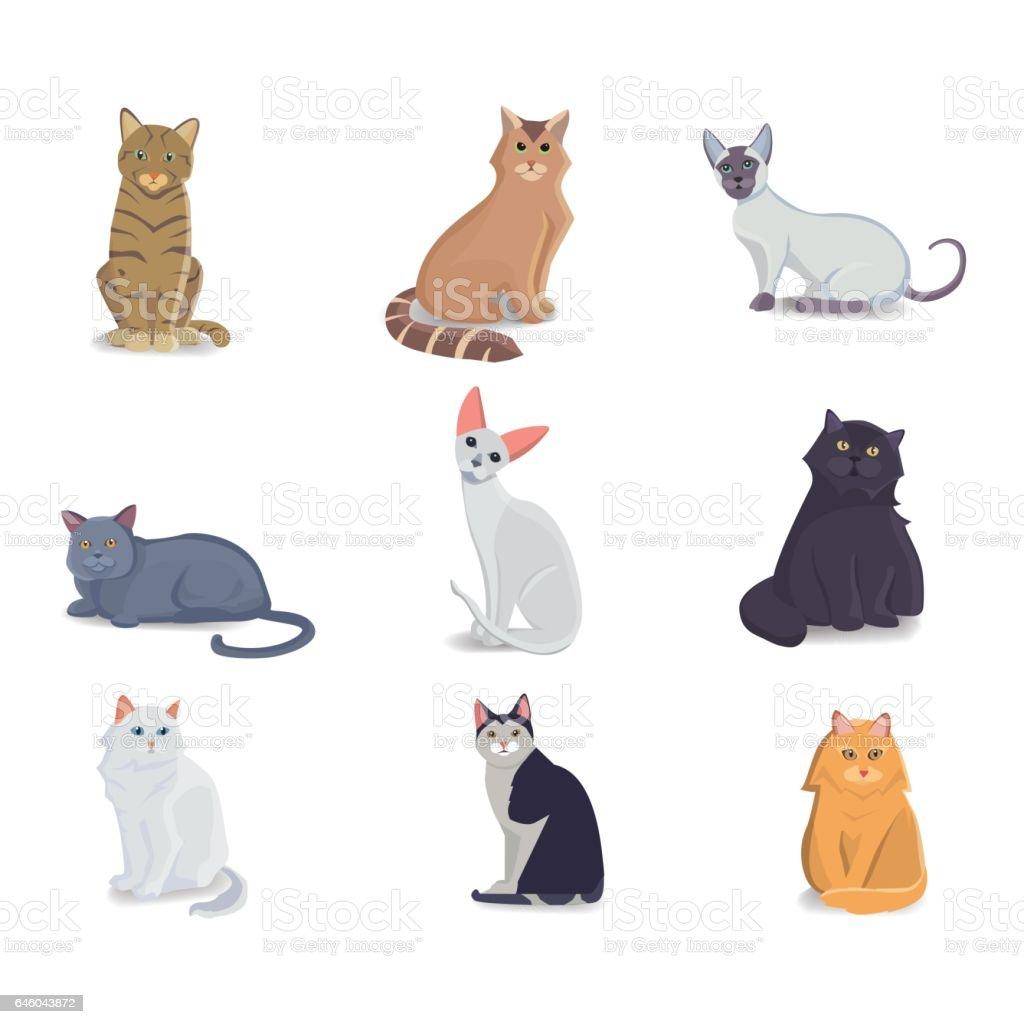 Coleção gatos de diferentes raças. Gato isolado de vetor sobre fundo branco. Animal em casa ou animais de estimação. Fanny faces de gatinhos - ilustração de arte em vetor