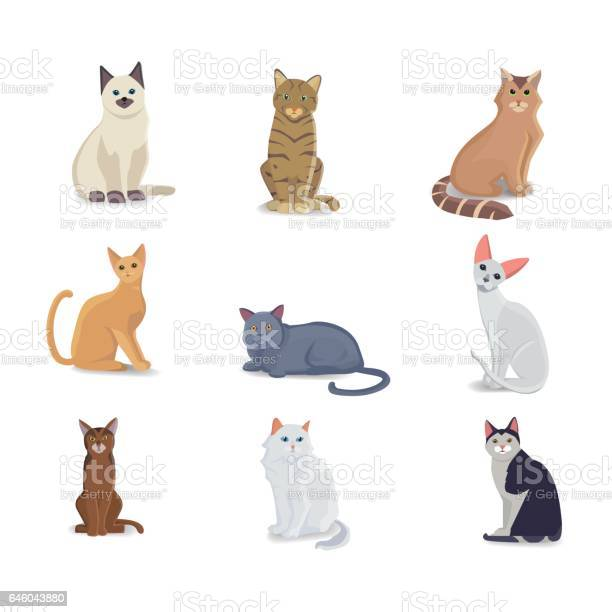 Collection cats of different breeds vector isolated cat on white vector id646043880?b=1&k=6&m=646043880&s=612x612&h=svihrj3484 8rncfbtv8u 8rpuo6qwxa66zkkbniw4c=