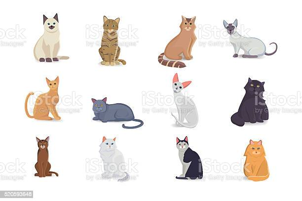 Collection cats of different breeds vector isolated cats on white vector id520593648?b=1&k=6&m=520593648&s=612x612&h=cmdtbsrh4rth4lzxajldelerux879q7cktqtt rk2uo=