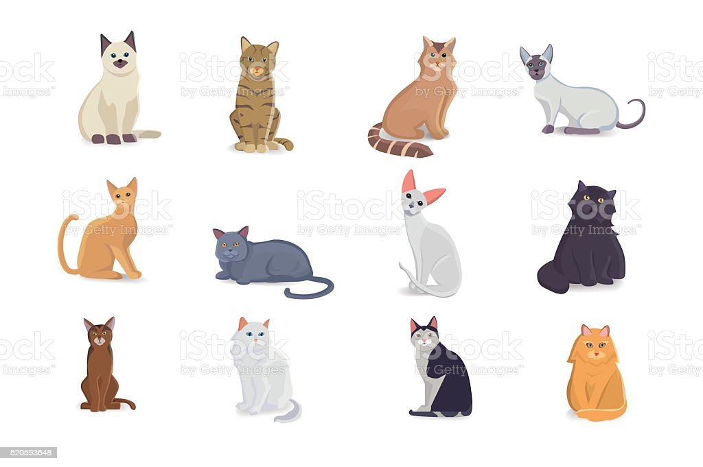 Collection Cats of Different Breeds. Vector isolated cats on white vector art illustration