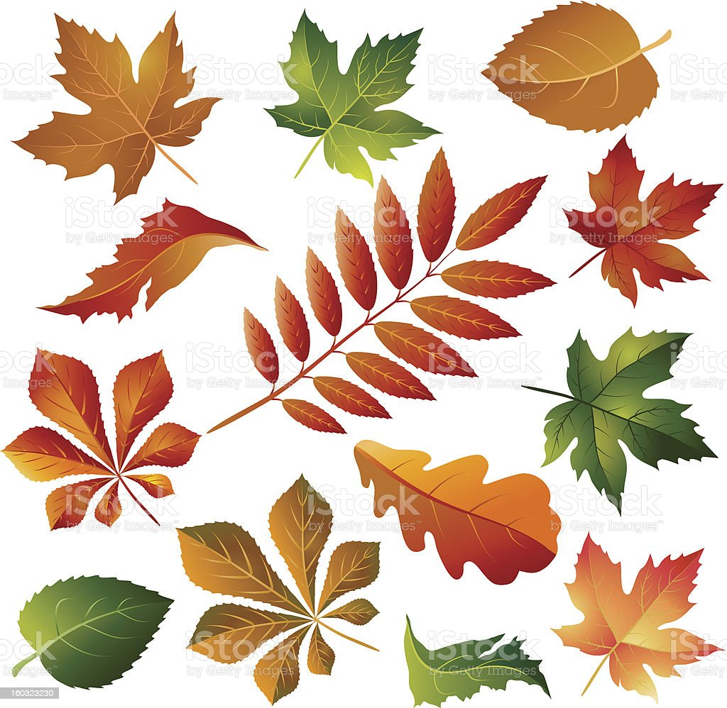 Collection colorful autumn leaves royalty-free collection colorful autumn leaves stock vector art & more images of autumn
