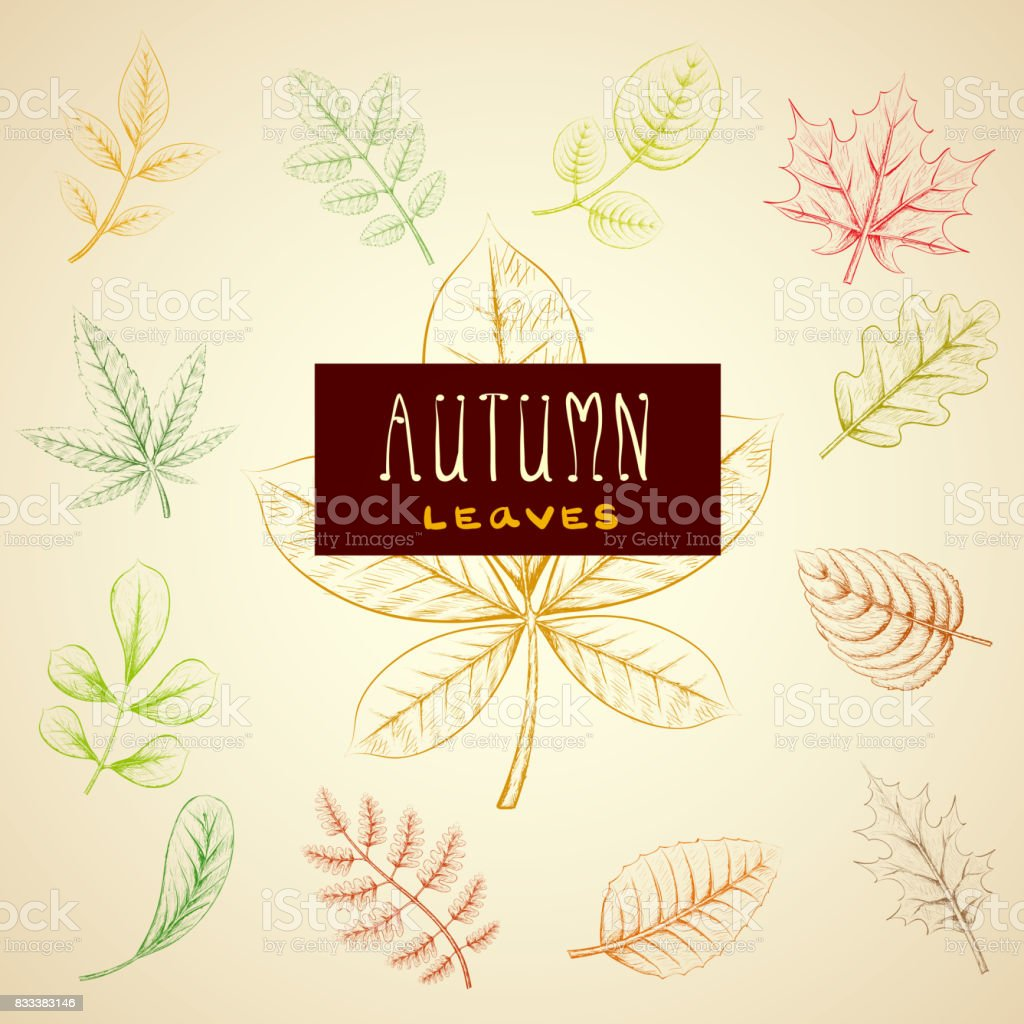Collection colorful autumn leaves. vector art illustration
