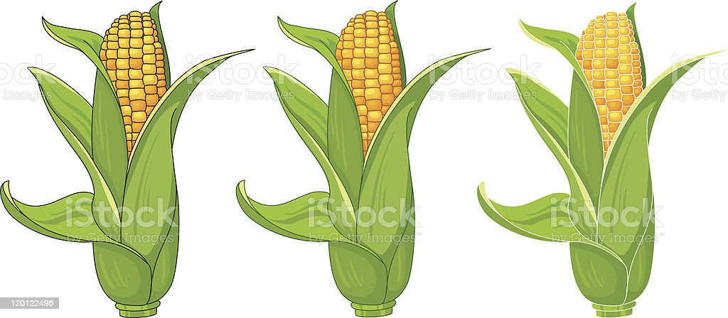 collection corn vector art illustration