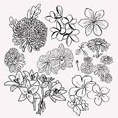 collection floral botanical set Monochrome illustration.