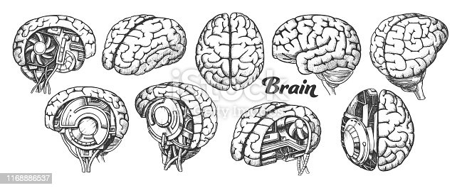 Collection In Different Views Brain Set Vector