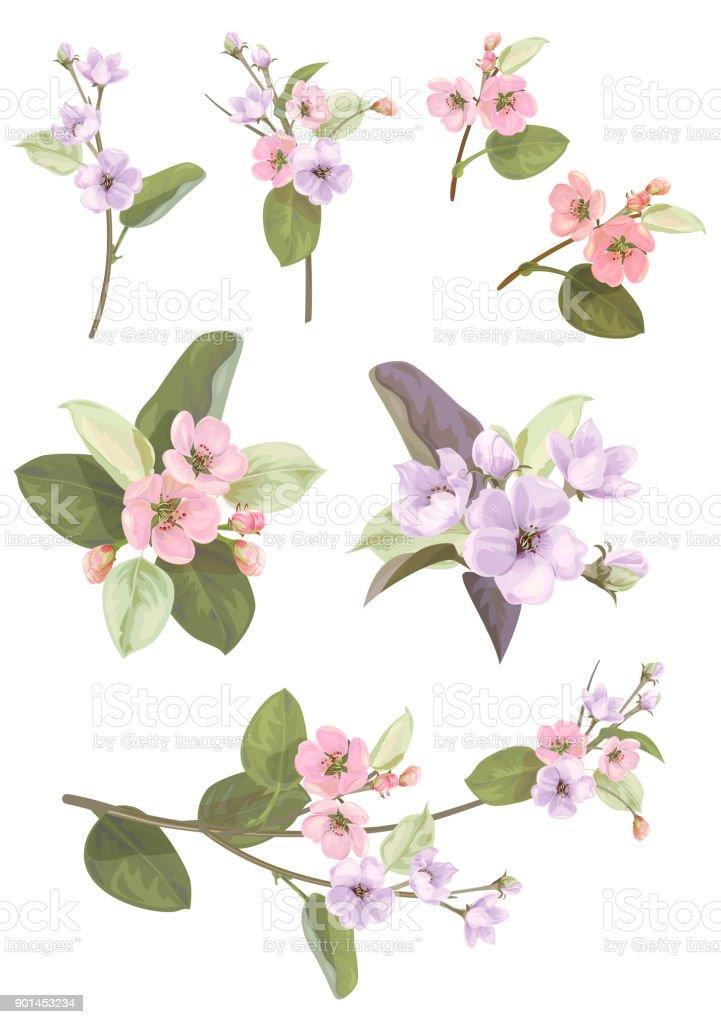 ilustração de coleção de apple florzinhas ramos brotos folhas verdes