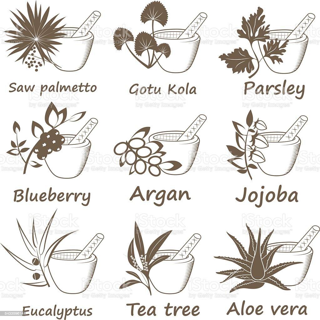 Collection of Ayurvedic Herbs. vector art illustration