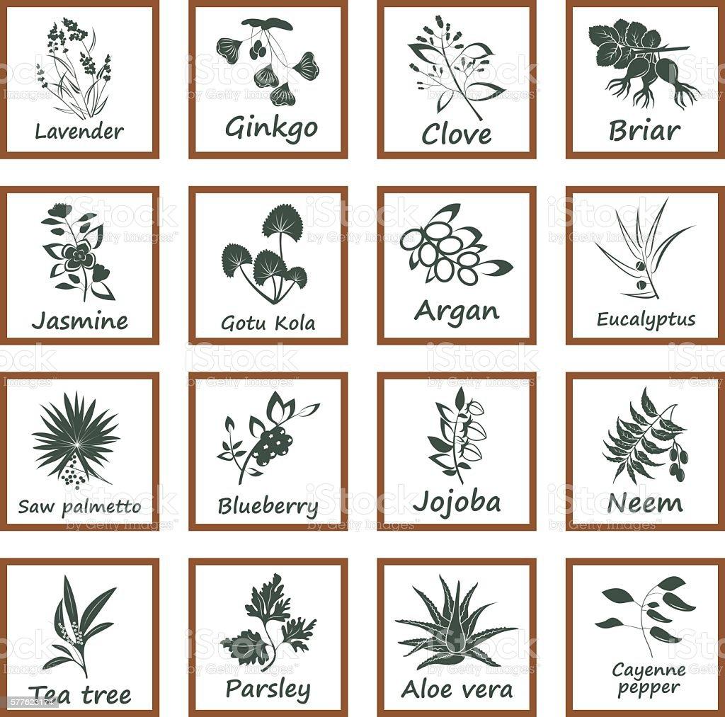 Collection of Ayurvedic Herbs vector art illustration