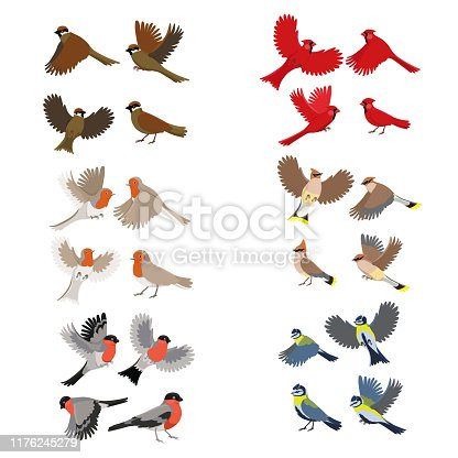 Collection of birds robin, red cardinal, tits, sparrow, bullfinches, waxwing. Isolated on white background.