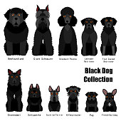collection of  black dog