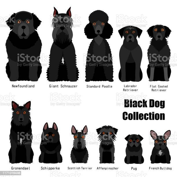 Collection of black dog vector id1171016446?b=1&k=6&m=1171016446&s=612x612&h=e5dmqhbgxm2ygyvcsd6slkpemr8nennsta3hq syiwi=