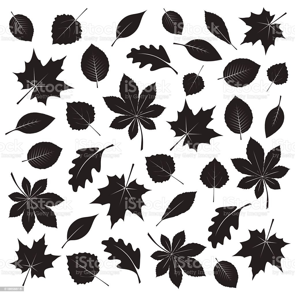 Collection of Black Leafs. Vector Illustration. vector art illustration
