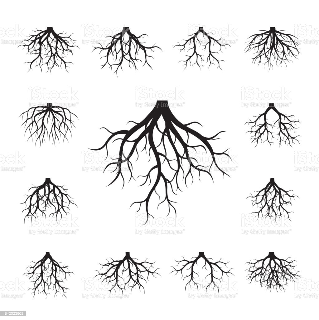 Sammlung von schwarzen Wurzeln. – Vektorgrafik
