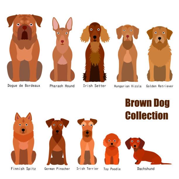 sammlung von braunen hund - vizsla stock-grafiken, -clipart, -cartoons und -symbole