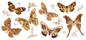 A collection of butterflies and moths painted in brown. The moth is a mystical symbol and talisman. Stock vector illustration isolated on white background.