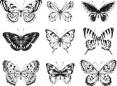 Collection of butterflies, hand-drawn illustration.