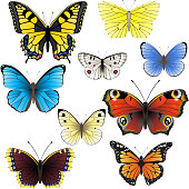Collection of butterflies on white background
