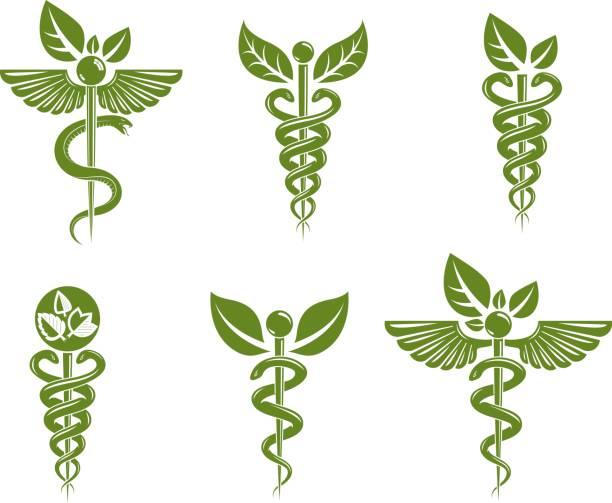 カドゥケウス イラスト集は毒ヘビと鳥の翼、ヘルスケアの概念ベクトルのイラストで構成されています。代替医療のテーマです。 - ヘルメスの杖点のイラスト素材/クリップアート素材/マンガ素材/アイコン素材