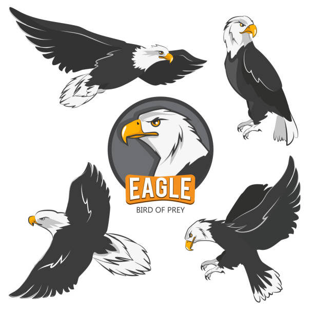 collection of cartoon eagles. flying birds isolate on white - eagle character stock illustrations, clip art, cartoons, & icons